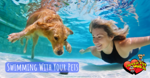 Swimming With Your Pets
